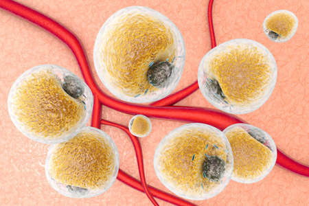 adipose tissue: Fat cells in human tissue and between blood vessels and capillars. Scientific 3d rendered Illustration.