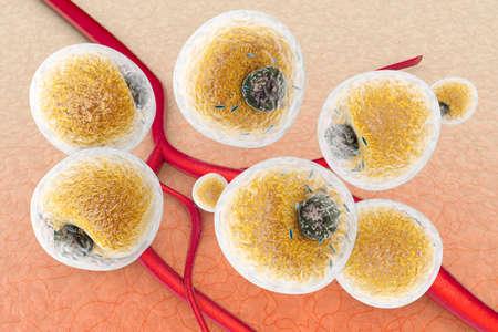 vaisseaux sanguins: Les cellules graisseuses dans les tissus humains et entre les vaisseaux sanguins et capillars. 3d scientifique rendu Illustration.