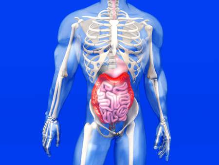 3D visualization of the human anatomy.  photo