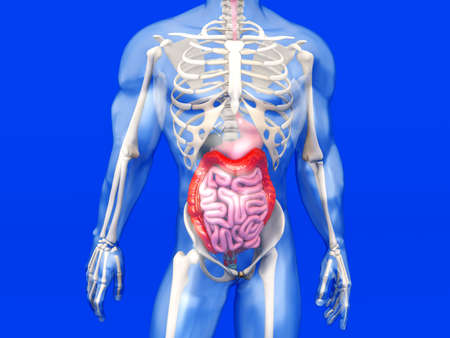 diverticulitis: 3D visualization of the human anatomy.