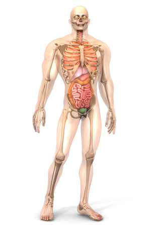 colonic: 3D visualization of the human anatomy.