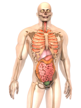 irritable bowel syndrome: 3D visualization of the human anatomy. Stock Photo