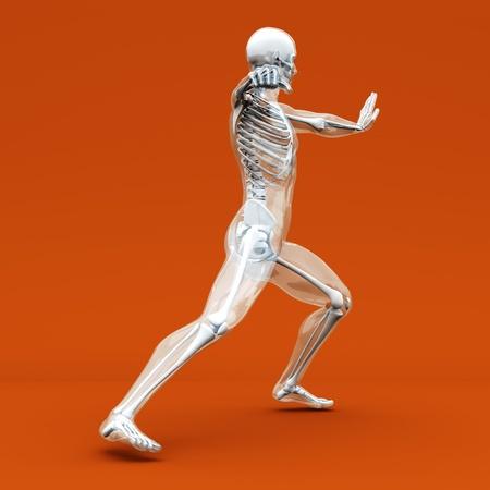 anatomie mens: Een medische visualisatie van de menselijke anatomie. 3d teruggegeven illustratie.
