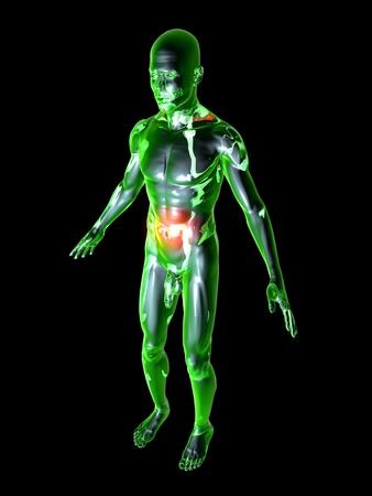 fisiologia: Ilustraci�n m�dica. 3D prestados ilustraci�n. Aislado en negro.