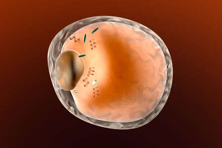 adipose tissue: A detailed fat cell. 3d rendered Illustration.   Stock Photo