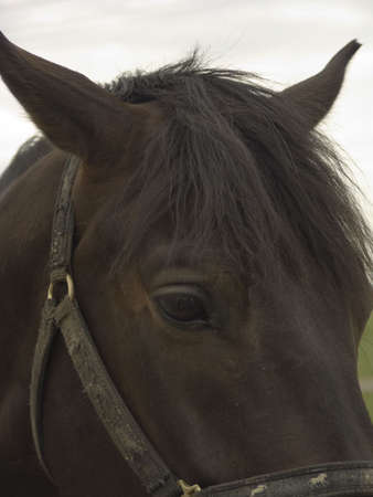 Close-up of horse head photo