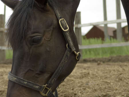 farmlife: Close-up of eating horse