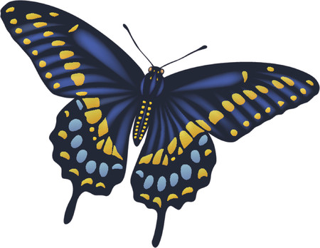 Full detailed vector butterfly Illustration