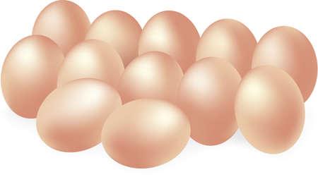 dozen: Vector illustration of dozen eggs
