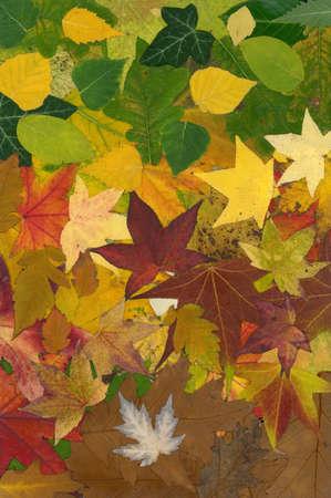 veiny: Vibrantes colores de oto�o Foto de archivo