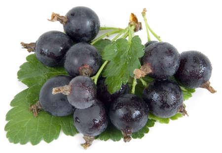 grosella: Terciopelo negro gooseberry - Nuevo h�brido entre Negro grosella y grosella, llamado Jostaberry Foto de archivo