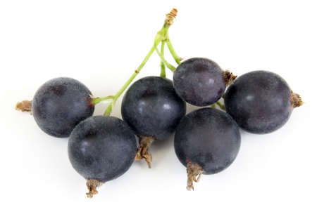 named: Black Velvet Gooseberry - New hybrid between Black Currant and Gooseberry, named  Stock Photo