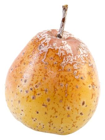 Rowan Berry Fruit, Sorbus Domestica Isolated on White