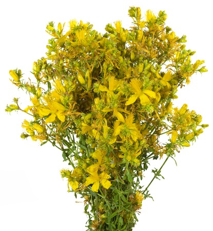 rosin: Bouquet St Johns wort Isolated on White  Stock Photo