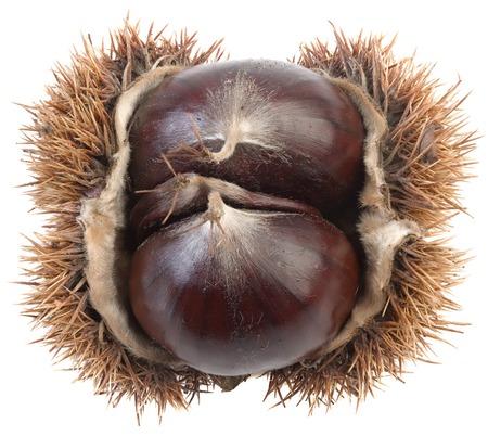 marron: Ripe Chestnut Isolated on White Background