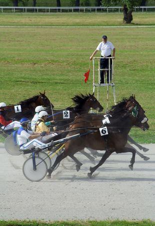 racehorses: Horce in de finish