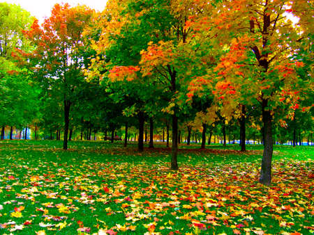 Autumn trees in the park photo