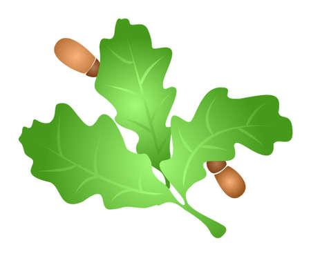 quercus: Oak