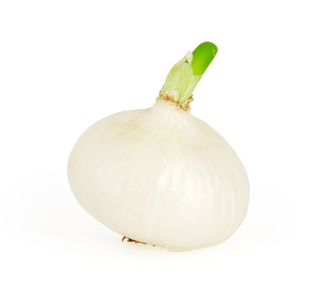 onion isolated: Cebolla blanca sobre fondo blanco