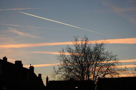 sky with tree silhouette Stock Photo