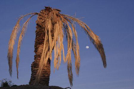 dead palmtree Stock Photo