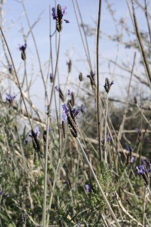 purple little flowers