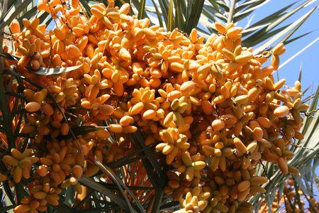palmfruit