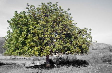 grey world,green tree
