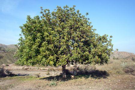 sunny lonely tree