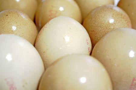 close up of fresh wet eggs Stock Photo