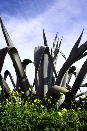 Alo� vera against blue sky with yellow flowers Stock Photo
