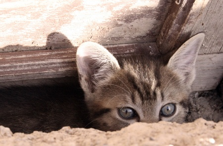 young cat looking over the edge of a wall