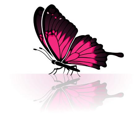 Farfalla con una riflessione a specchio, elemento per la progettazione, illustrazione vettoriale Vettoriali