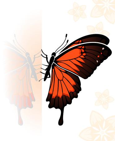 reflejo en espejo: Mariposa con una reflexi�n de espejo, elemento de dise�o, ilustraci�n  Vectores