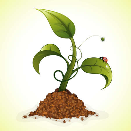 Young Green Sprout from the Ground with Water Drops and Ladybug Stock Vector - 12799430