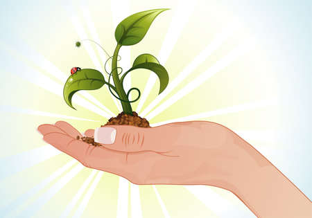 hands holding tree: Woman Hand with the Young Green Sprout from the Ground with Water Drops and Ladybug Illustration