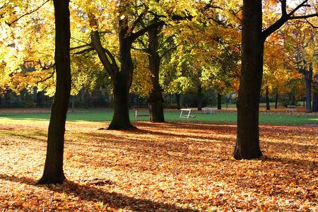 golden autumn scene with sunbeams on yelloworange foliage and trees in park photo