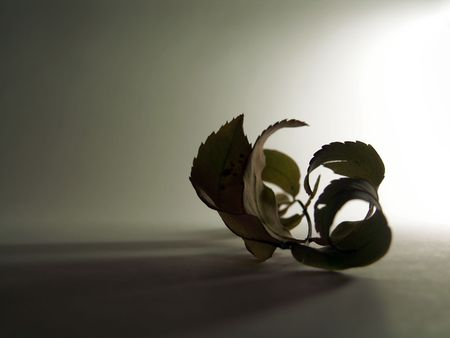 still life of turned leaf photo