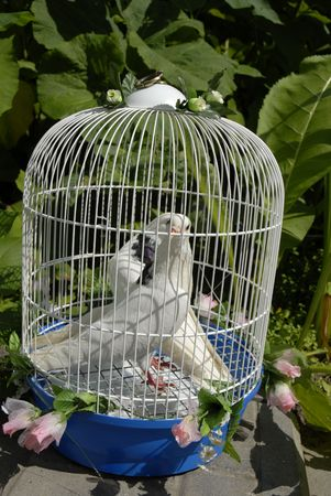 wedding doves in the cell photo