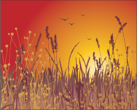 Grass vector silhouette and sunset. Ideally for your use in design. Vector