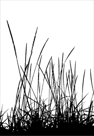 landscaped garden: Grass  vector  silhouette. Ideally for your use
