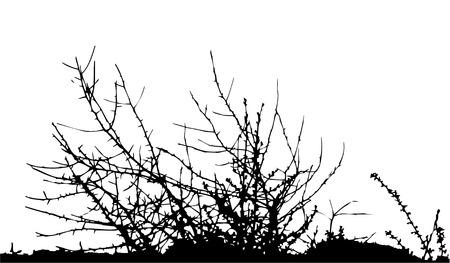 bush / silhouette / vectorIdeally for your use Stock Vector - 2251236