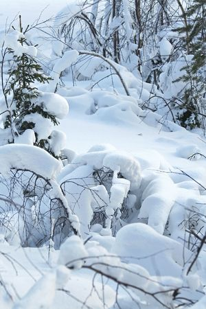 winter landscape vertical / snow forest / Finland /\ Lapland