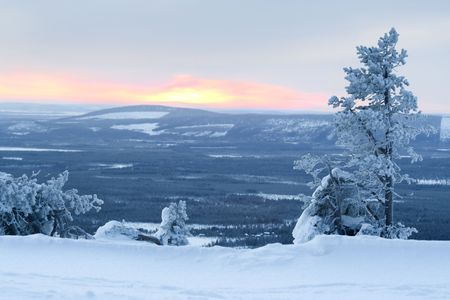winter landscape  lonely tree, sun and valley  Finland  photo