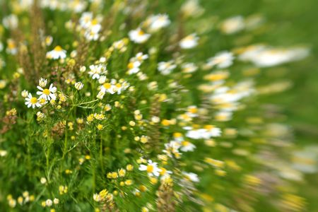 Meadow / Wild Flowers / summer background / It is  made by a special lens Lensbaby Stock Photo - 4310127