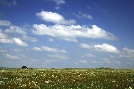 Real meadow and sky / summer  background / grazed horse  Stock Photo - 4310129
