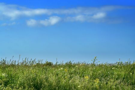 Real meadow and sky / summer background Stock Photo - 4310131