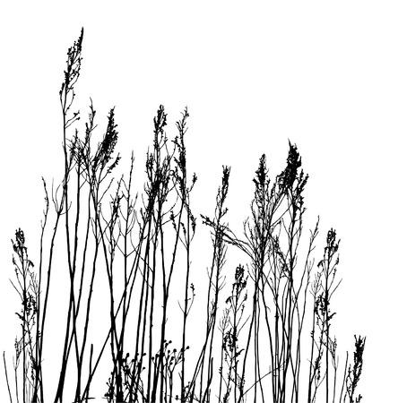 illustration herbe: v�ritable herbe silhouette  vector