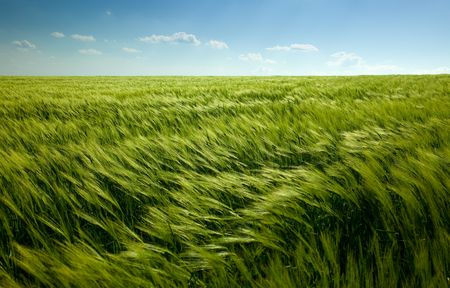 green wheat field and cloudy sky Stock Photo - 5025615