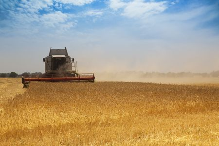 harvest time: Harvest time  A combine harvester working in a wheat field
